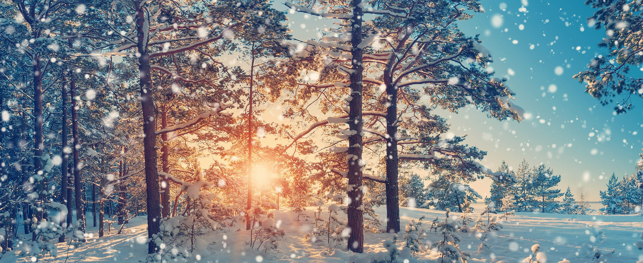 Winterdienst in Herne bis 300 Meter Fläche
